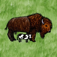 Domestic_Bison_with_Calf